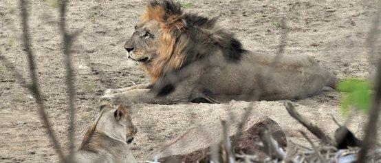 1 malawi-majete-lejon