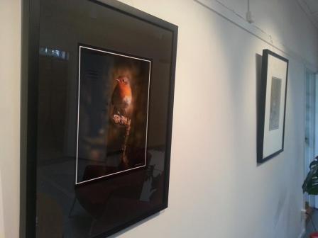Rödhake, en av Göran Forsbergs foton på utställningen.