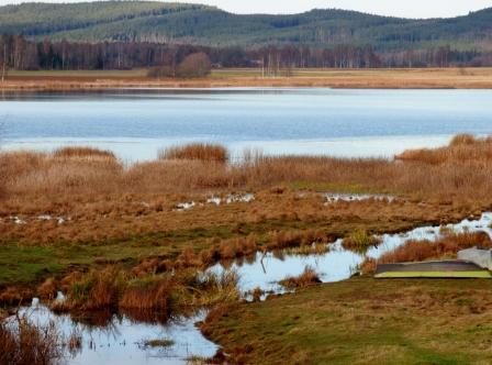 Sjön Fatburen, strax utanför Hedemora. Här fiskar hägern framgångsrikt  i å-mynningen ut i sjön. Skärper du blicken kanske du ser den på fotot? Jodå, den står där :-)