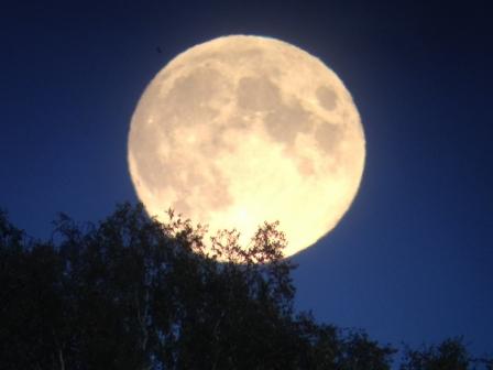 Fullmånen gick upp över Ottenbylund. Ovanför oss hörde vi trastarna sträcka ut över havet.