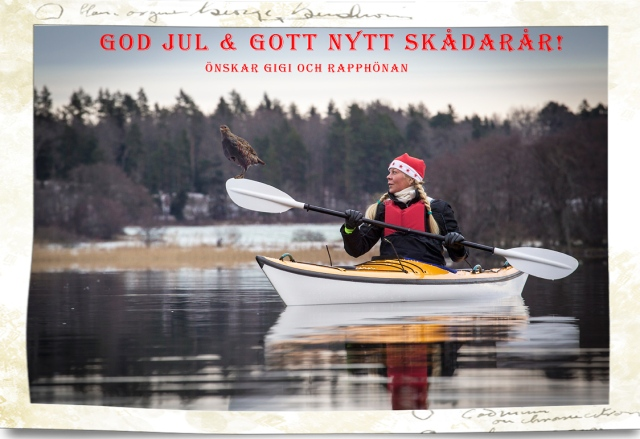 God-jul-rapphöna-på-paddel-b
