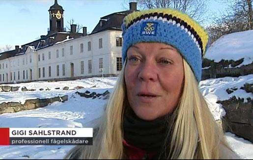 """Från inslaget på TV 4 Nyheterna, vid MOFs fågelmatning """"Fåglarnas slottsbar"""". Jag gillar läsa min titel! :-)"""