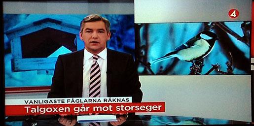 """TV 4 nyheterna gjorde ett trevligt inslag om """"Vinterfåglar inpå knuten"""". Reporter Åsa Stibner."""