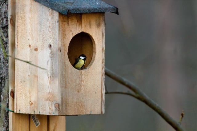 """Kursen """"Vinterfåglar inpå knuten"""" handlar om våra stannfåglar och fågelmatning."""