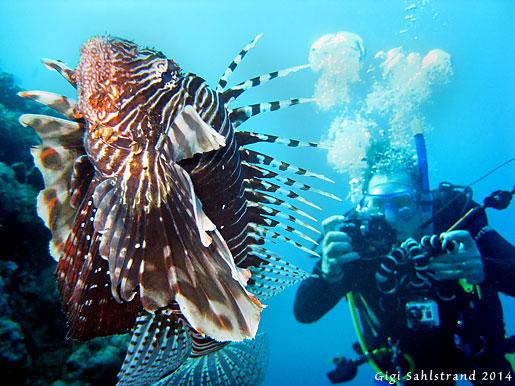 Lionfish (drakfisk på svenska) och Göran Forsberg
