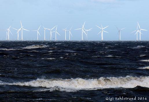 Vindsnurrorna fick jobba ordentligt ute i Öresund i hårda blåsten. Här passerar många sträck. Denna dag sträckte det ganska bra med ejder. Undrar hur mycket snurrorna stör dem?