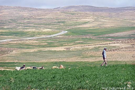 Allt är inte sand och sten i Jordaniens inland. På våren grönskar öknen upp.