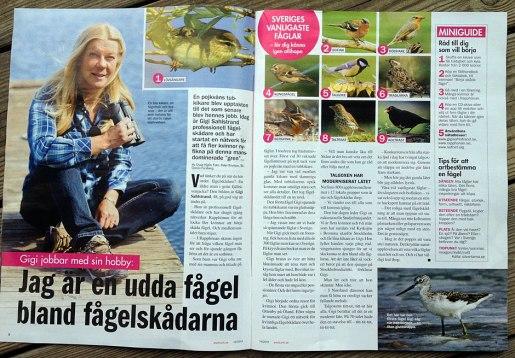 PS nr 6 på Sveriges vanligaste fåglar ska vara trädpiplärka, inte trädlärka.