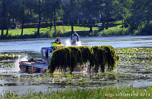 Trevligt att se att Solna jobbar med Råstasjön. Rensning pågår av vattenväxter så inte sjön växer igen.