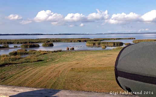 Utsikt från Glänåstornet vid Tåkern. En fågeltorn som alla kan komma upp i! Den har en lång ramp upp med lätt lutning.