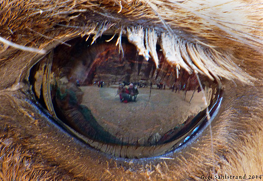 Ur en kamela öga....där ser man bla mig och min bror...