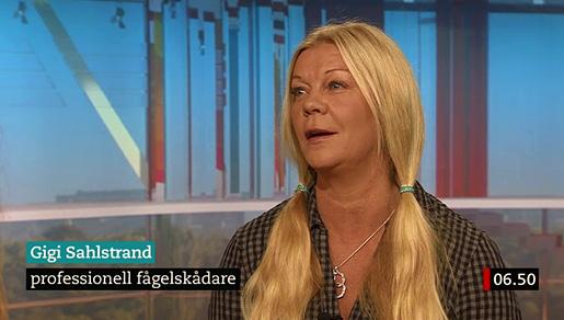 1-Godmorgon-Sverige-b