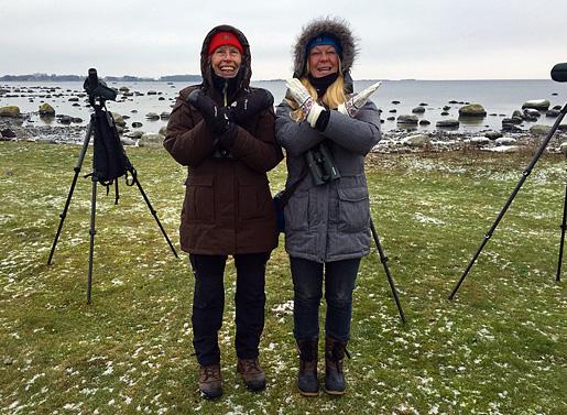 Jag och Marianne Dannbeck har precis kryssat fläckdrillsnäppa vid Östra Hammaren utanför Kristianstad.