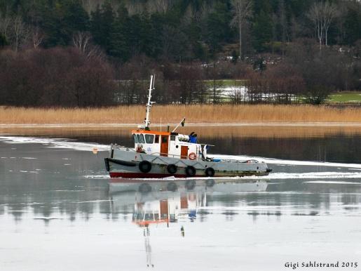Plötsligt hördes ett enormt brak utanför nere i viken. En båt fick det lite svårare att ta sig igenom gamla isen mot den nya spegeltunna isen..