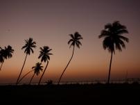 Denna syn möttes vi av varje morgon på hotellet när solen gick upp över havet. Crown Plaza i Salalah, Oman. November 2015