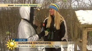 Gigi-Tv4-dec-2015-Fågelmatning-c