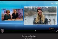 Jag var utsänd reporter från Gomorron Sverige. Jag stod vid Råstasjön och berättade om hur räkningen går till i helgen på evenemanget Vinterfåglar inpå knuten. Jan-17